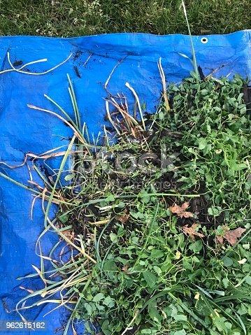 Large blue tarps holding large amount of weeds.    iPhone