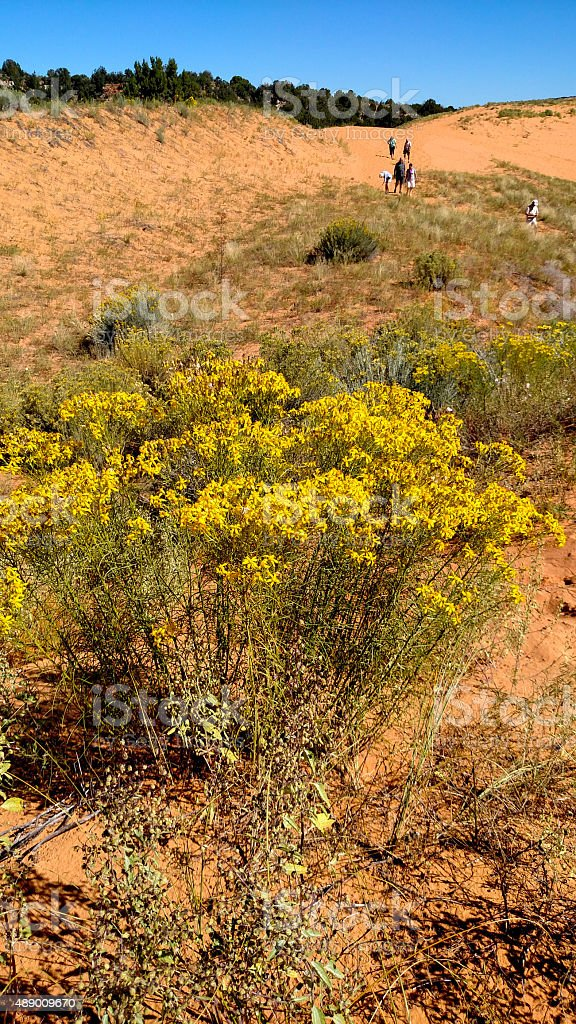 Weeds yellow flowers coral pink sand dunes state park utah stock weeds yellow flowers coral pink sand dunes state park utah royalty free stock photo mightylinksfo