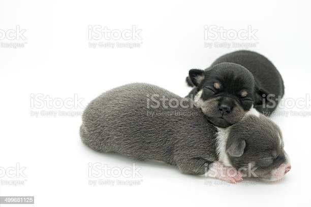 Week old puppies picture id499661125?b=1&k=6&m=499661125&s=612x612&h=qeqwvbbum6iyiq9rm m5dp6hv pkownbc6vn24ffn24=