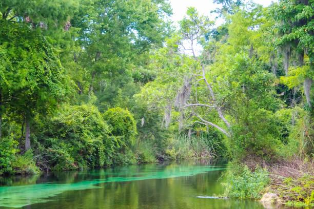 Weeki wachee springs river picture id1175525820?b=1&k=6&m=1175525820&s=612x612&w=0&h=qsq4jvoitcxvf2f1upklpe8hf 0ys3aumjej9g ti9m=