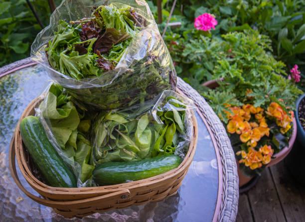 weekly farm share stock photo