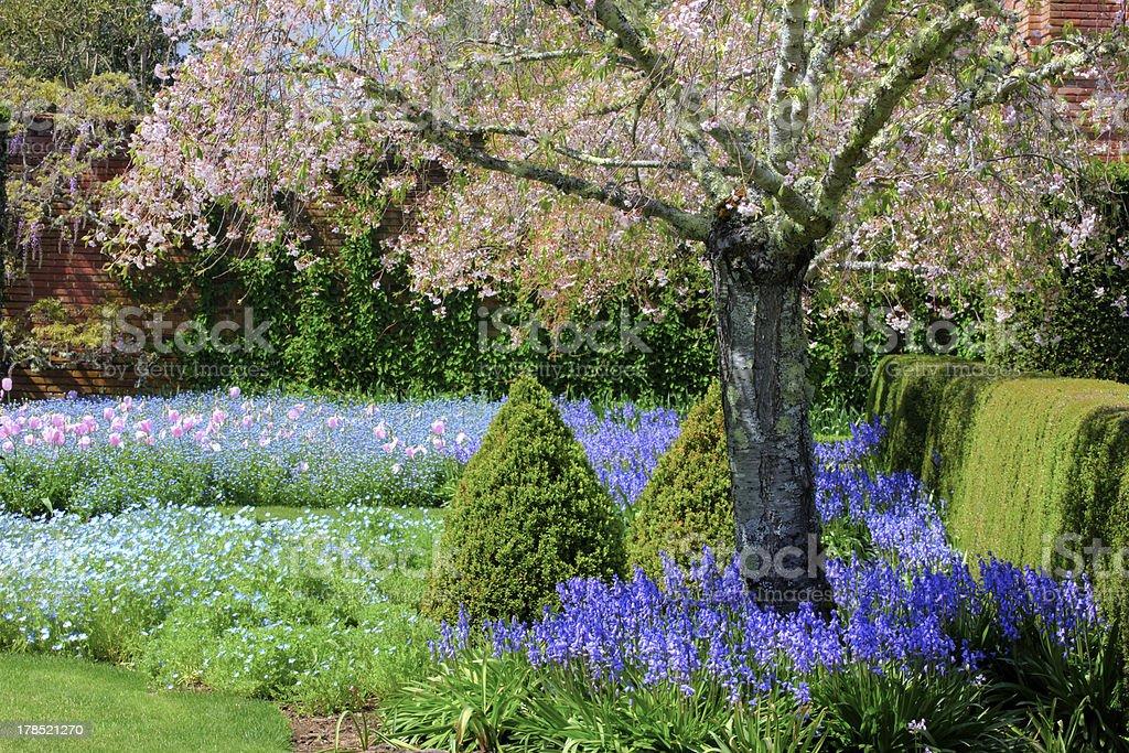 Weeping Japanese Crabapple Tree in Full Bloom stock photo