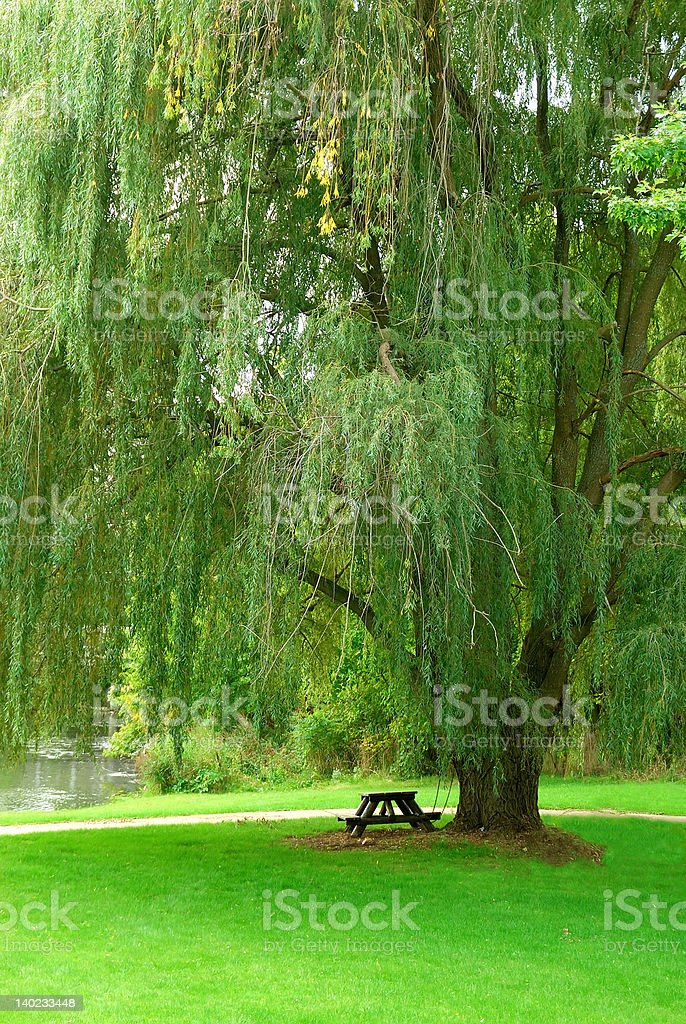 Weeping Willow by the Stream stock photo