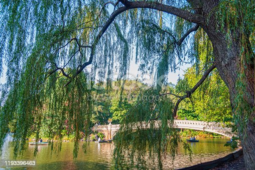 A large Weeping willow tree near the boathouse in Central Park.
