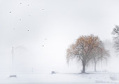A weeping willow tree in the fog during the winter with birds in the sky