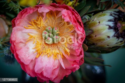 Peony blooming flower set in a bouquet. Peony in pink and yellow used together with other flowers for decoration in ceremonial event
