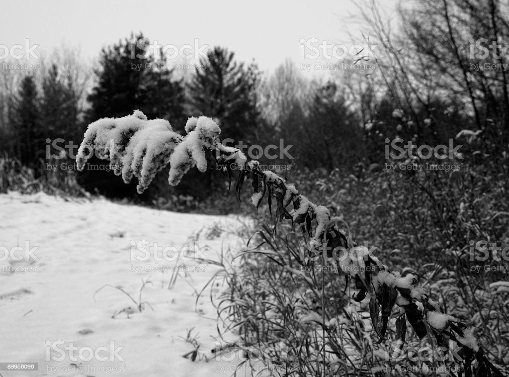 Weight of Winter stock photo