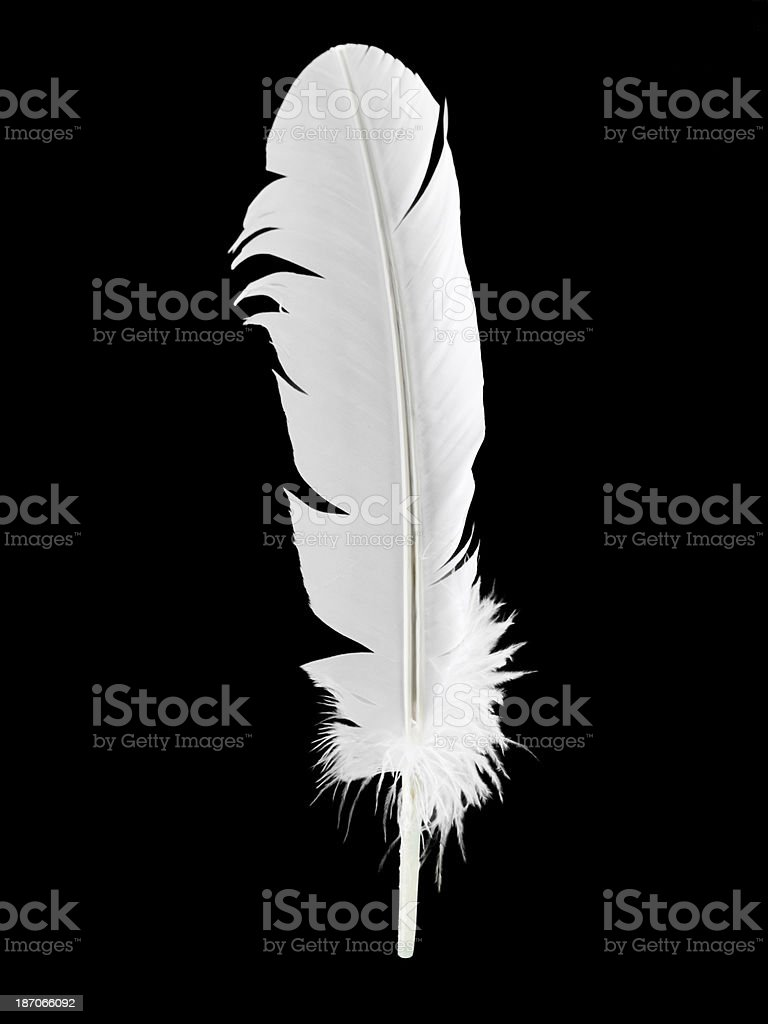 Weightless feather in mid air royalty-free stock photo