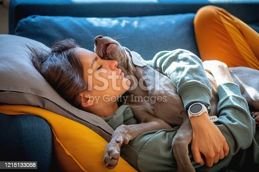 Weimaraner puppy lying on top of young woman its owner on the sofa, both asleep