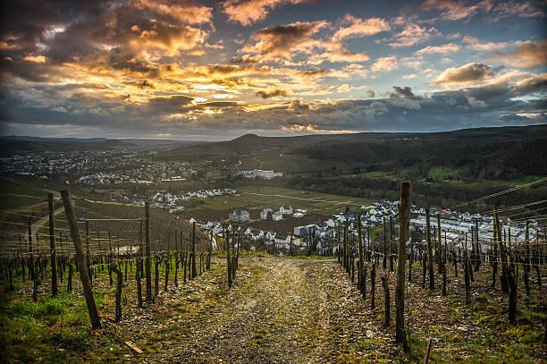 Weinberge in Ahrweiler – Foto