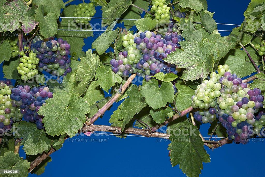 Weintrauben royalty-free 스톡 사진