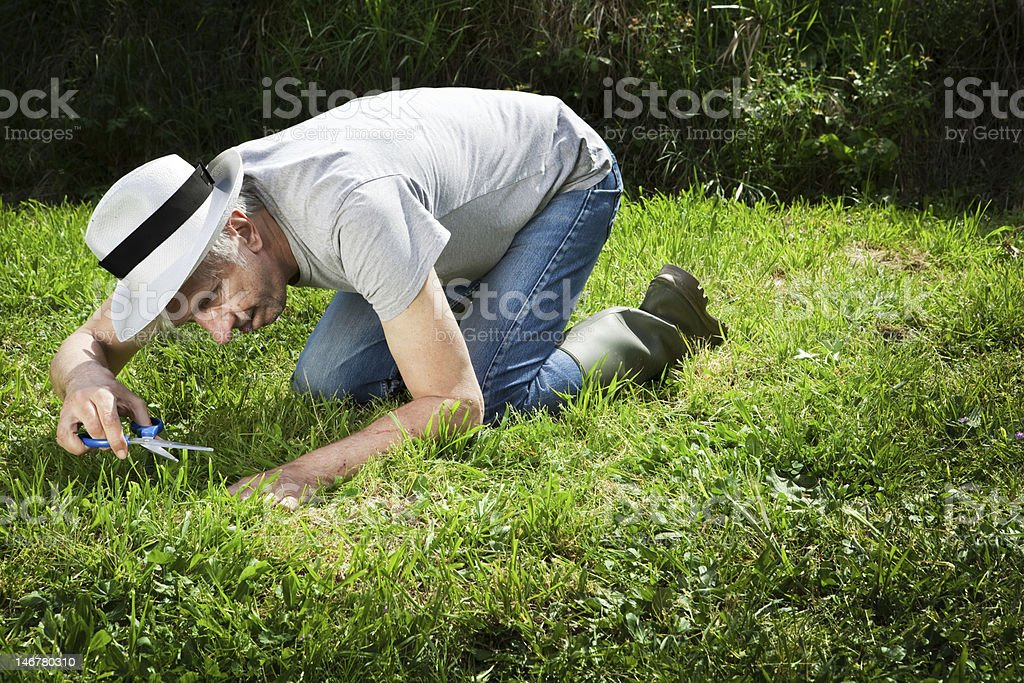 Weird gardener. stock photo