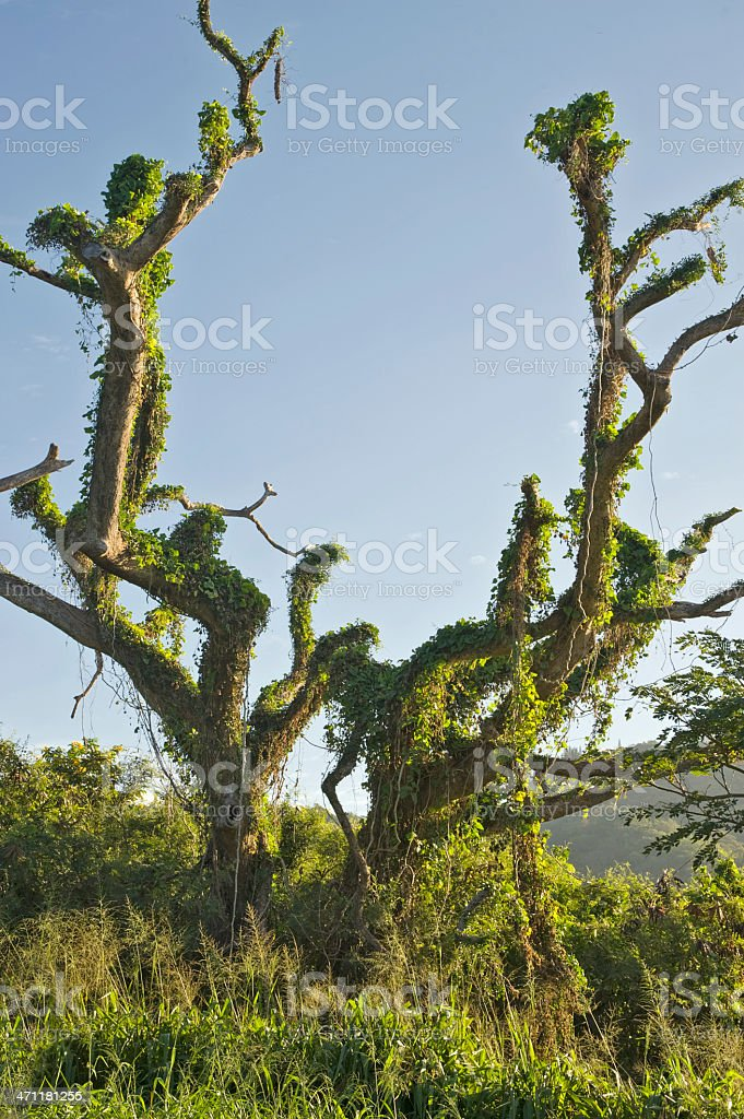 Weird Looking Tree royalty-free stock photo