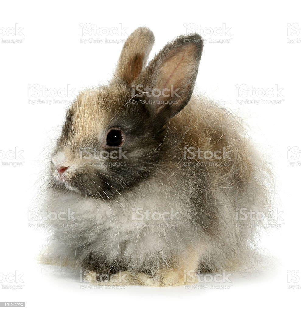 Weird rabbit bunny head isolated on white stock photo