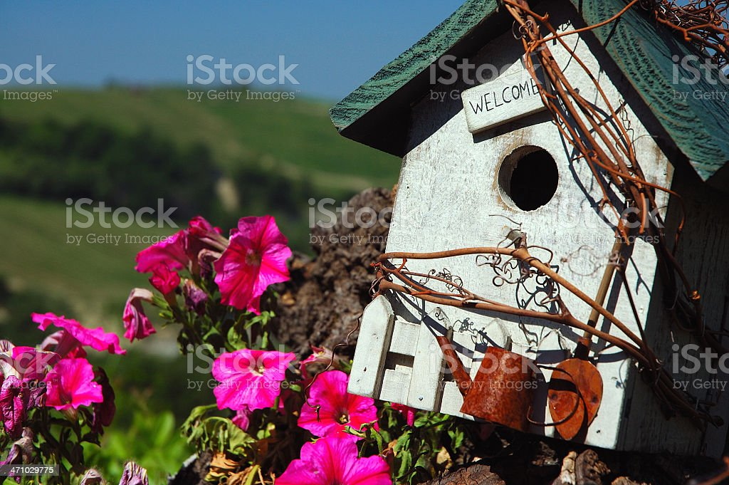 Welcome birds 2 royalty-free stock photo