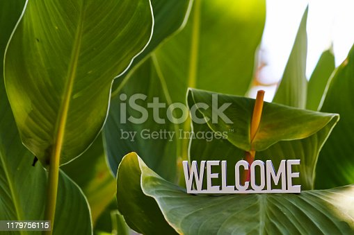Welcome sign on green leaves background