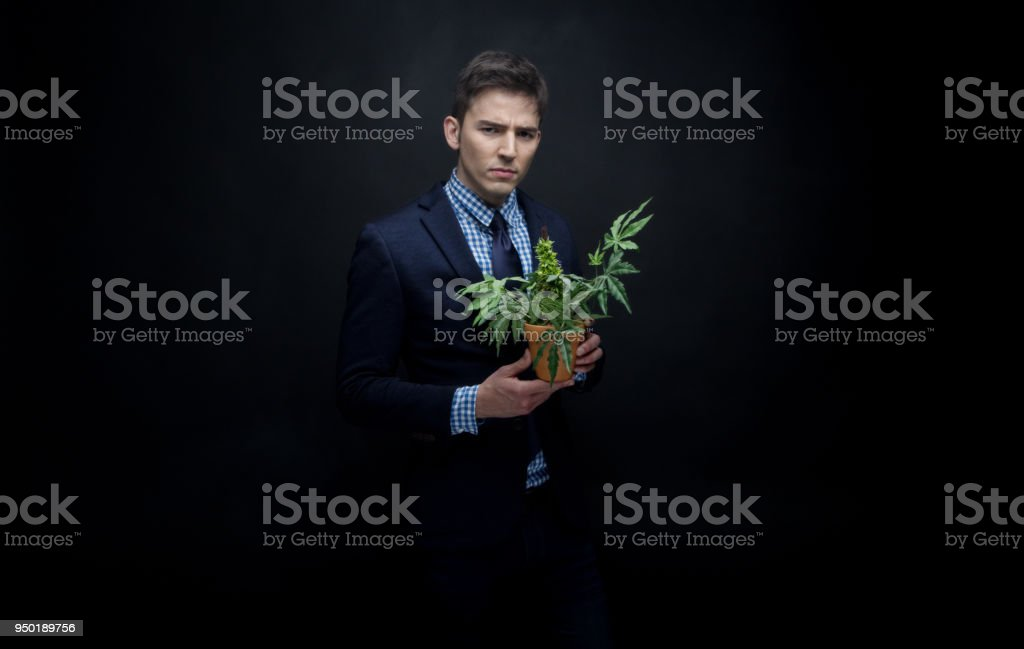 Well dressed businessman holding his marijuana plant stock photo