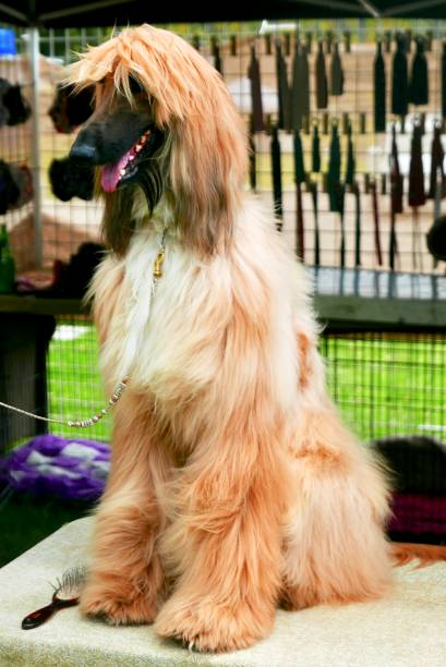 Well Groomed Dogs with style at grassy park outdoors stock photo