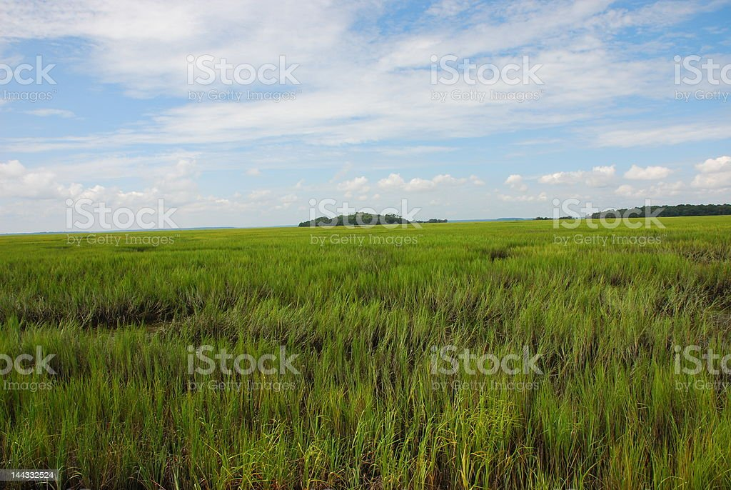 Well Preserved Wetlands stock photo