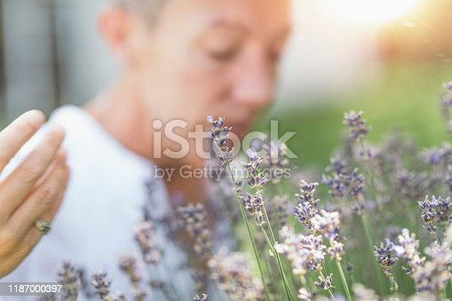 1175869940 istock photo Wellbeing in Nature. Woman Enjoying the Scent of Lavender Flowers 1187000397