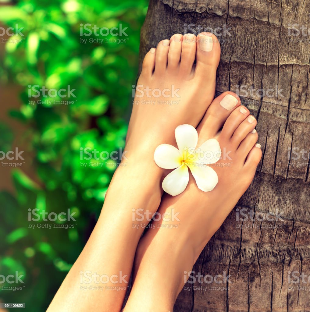 Well-groomed feet lay on palm trunk. stock photo
