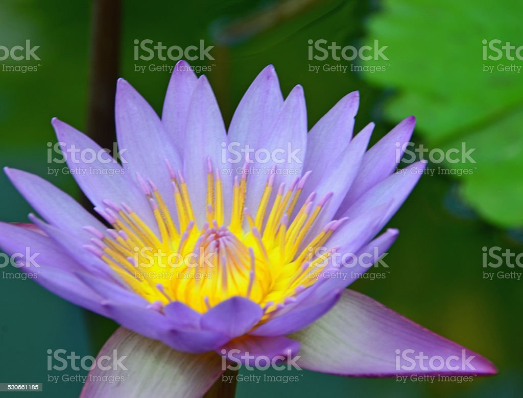 Wellington Botanic Gardens Purple Yellow Flowers Stock Photo More