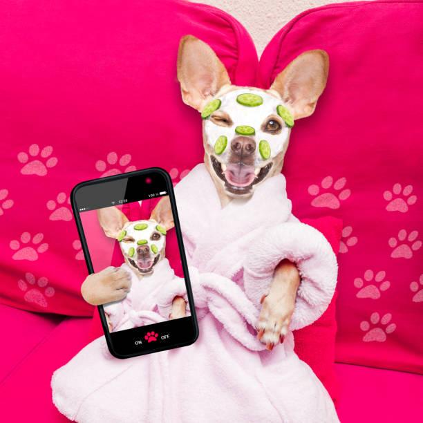 Wellness beauty mask spa dog picture id1035566278?b=1&k=6&m=1035566278&s=612x612&w=0&h=drlzic eeo5ww905iqyu8mm98tdmcrva8tn3yefv3rw=
