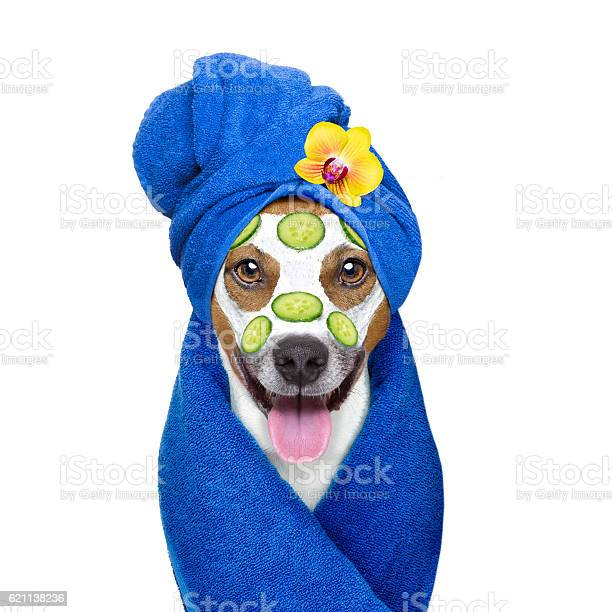 Wellness beauty mask spa dog picture id621138236?b=1&k=6&m=621138236&s=612x612&h=rkdwpxo4pi2u1k2npie1l7qbmewbcpdp12ouvgbwdim=