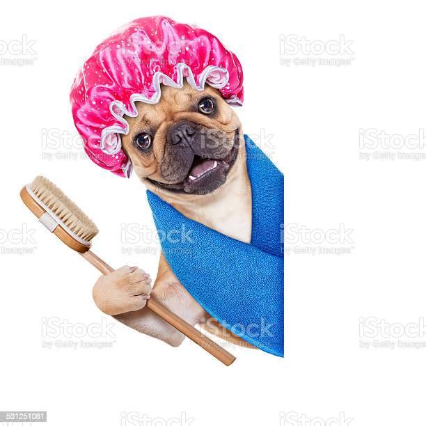 Wellness dog picture id531251081?b=1&k=6&m=531251081&s=612x612&h=8fnasbuk57a mu1acp194zpprshbat 0qkzpdboi70k=