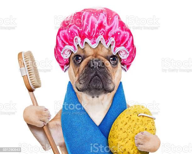 Wellness dog picture id531290543?b=1&k=6&m=531290543&s=612x612&h=njxwugor1yysg5se2fwtdouayfck6byyusuhofkwkbw=