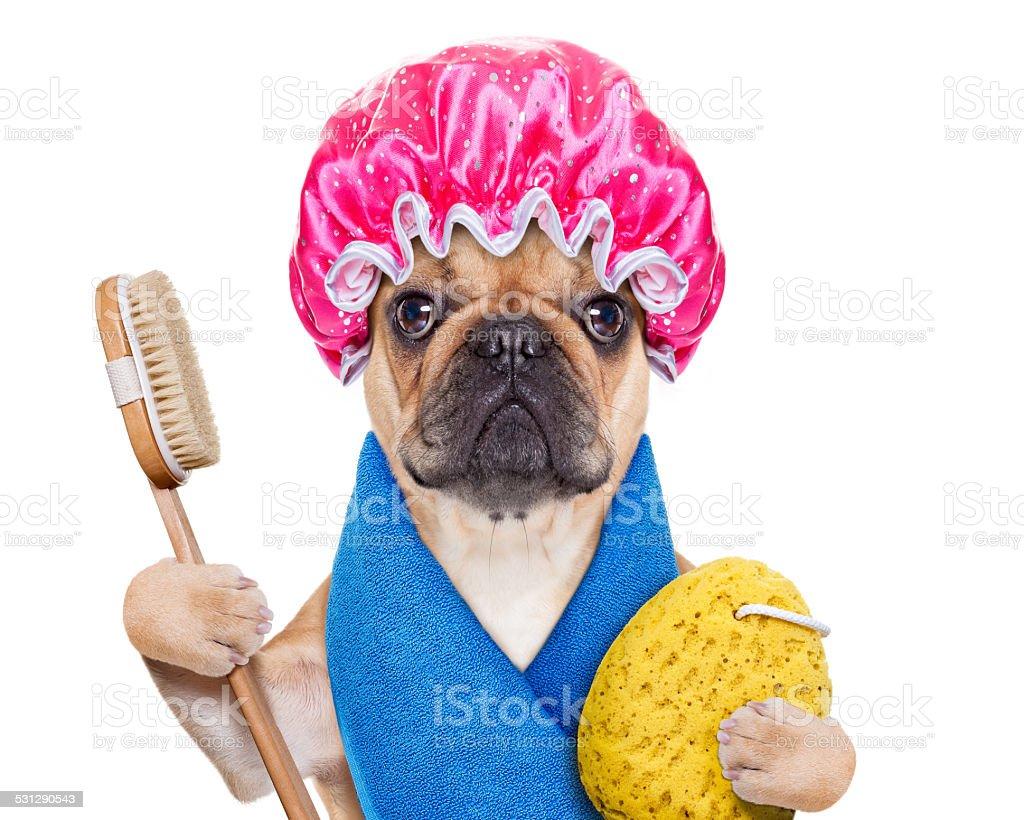 wellness dog stock photo
