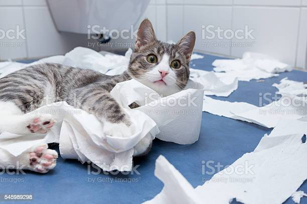 Wellness in the bathroom picture id545989298?b=1&k=6&m=545989298&s=612x612&h=hcbn9z9mv9fmkl0f79hi2admuqalri8bjzgcehpp19e=