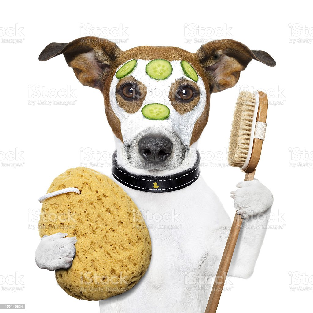 wellness spa wash sponge dog royalty-free stock photo