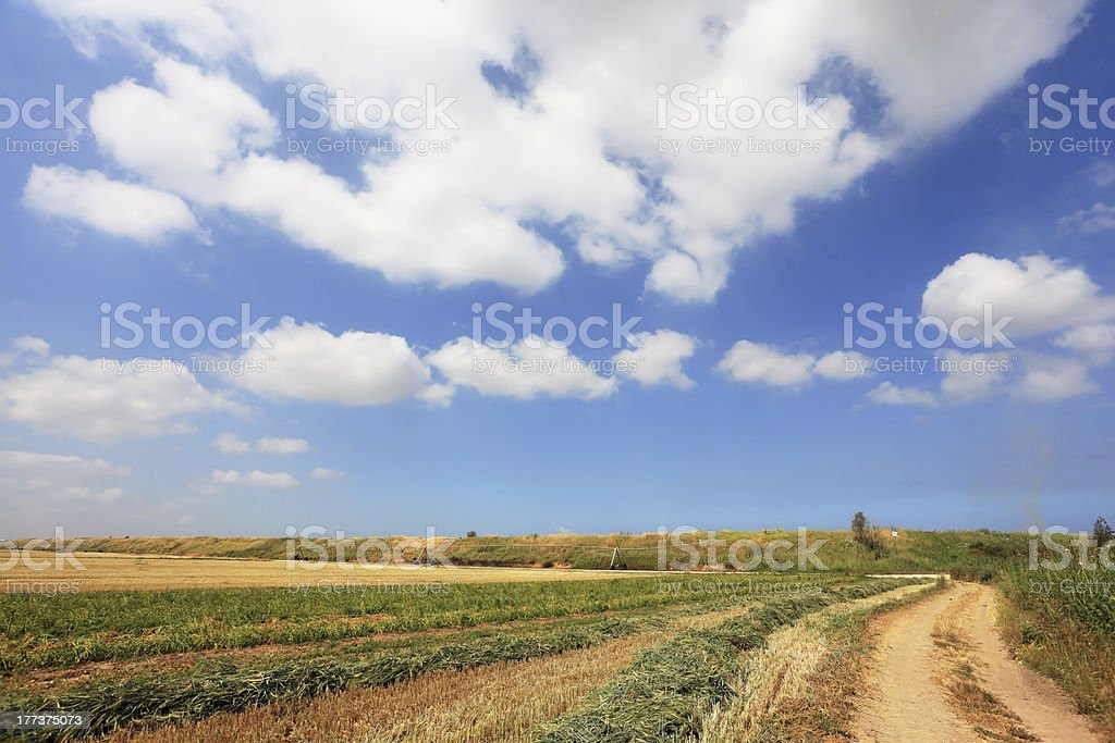 Well-trodden dirt road to the fields royalty-free stock photo
