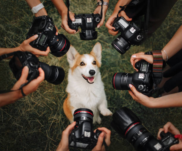 Welsh corgi pembroke dog posing for cameras picture id1165547103?b=1&k=6&m=1165547103&s=612x612&w=0&h=cb k5iyqsp62qccmbwnfguqoujmwrg3xtrz 36hrkpq=