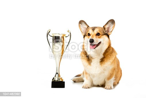 istock welsh corgi pembroke sitting near golden trophy cup isolated on white background 1041482392