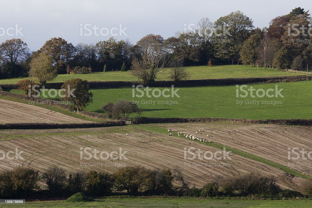 Welsh Country side with Sheep Grazing stock photo