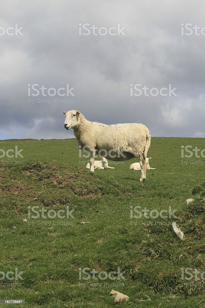 Welsh mother in Garw Valley royalty-free stock photo