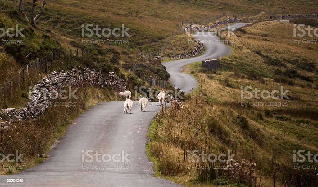Welsh mountain road Sheep on a Welsh road in the Brecon Beacons, South Wales. 2015 Stock Photo