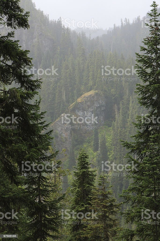 Wenatchee National Forest royalty-free stock photo