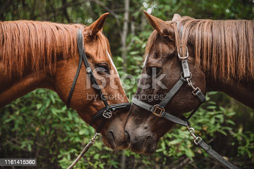 Shot of two horses being affectionate with each other