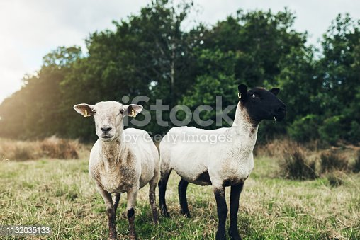 945075416 istock photo Were'e brothers can't you see? 1132035133