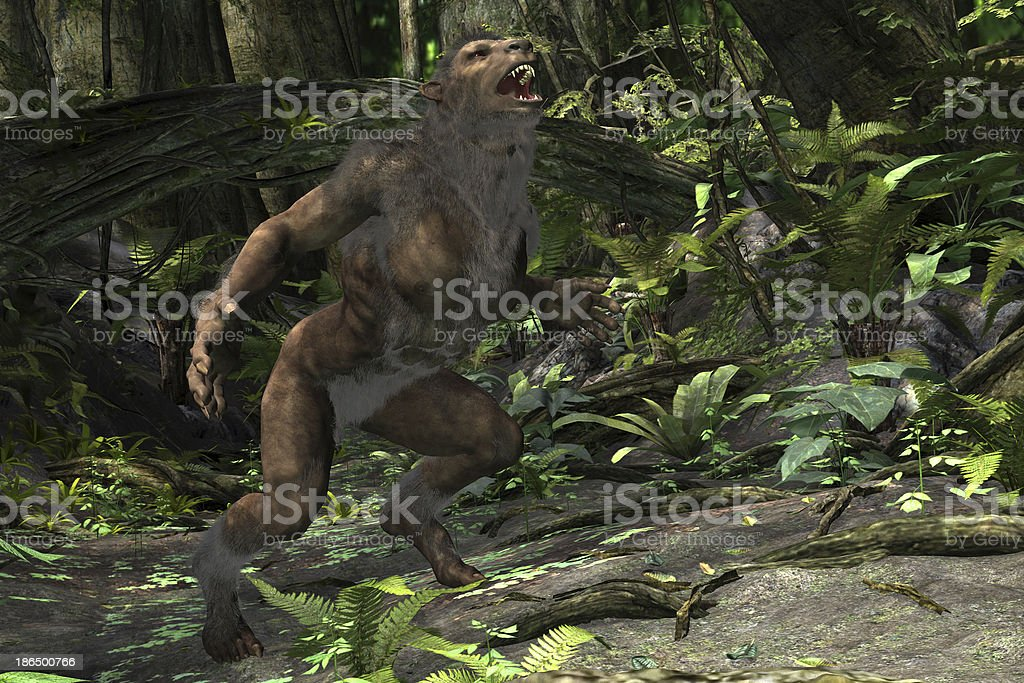 Werewolf catching a scent royalty-free stock photo