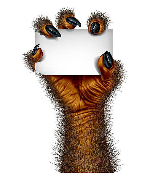werewolf hand - cursed stock pictures, royalty-free photos & images