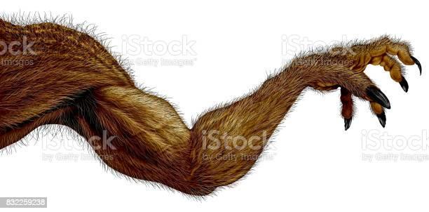 Werewolf monster arm picture id832259238?b=1&k=6&m=832259238&s=612x612&h=jqyyjdzfsjo0gvajecje9nvvf34n3tk73aakwzj ibi=