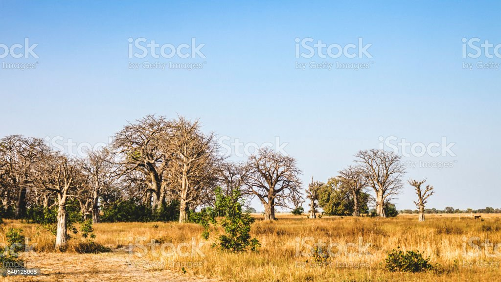 West African landscape - The Gambia stock photo