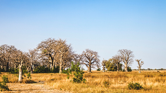 West African Landscape The Gambia Stock Photo - Download ...