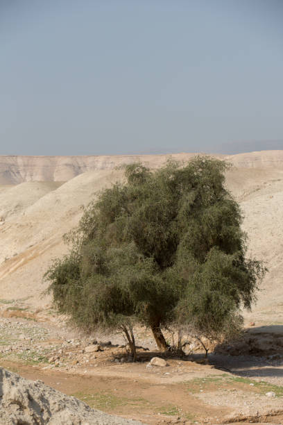 West bank in Israel stock photo