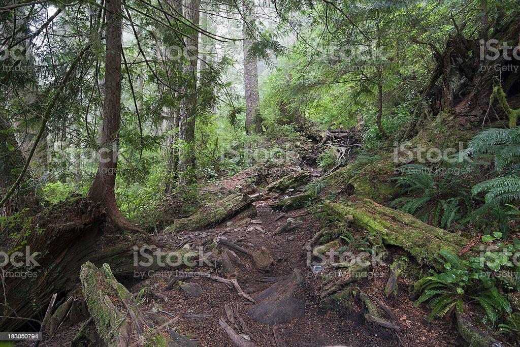West Coast Trail stock photo