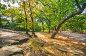 Panoramic view in Central Park at autumn. Manhattan. New York. USA